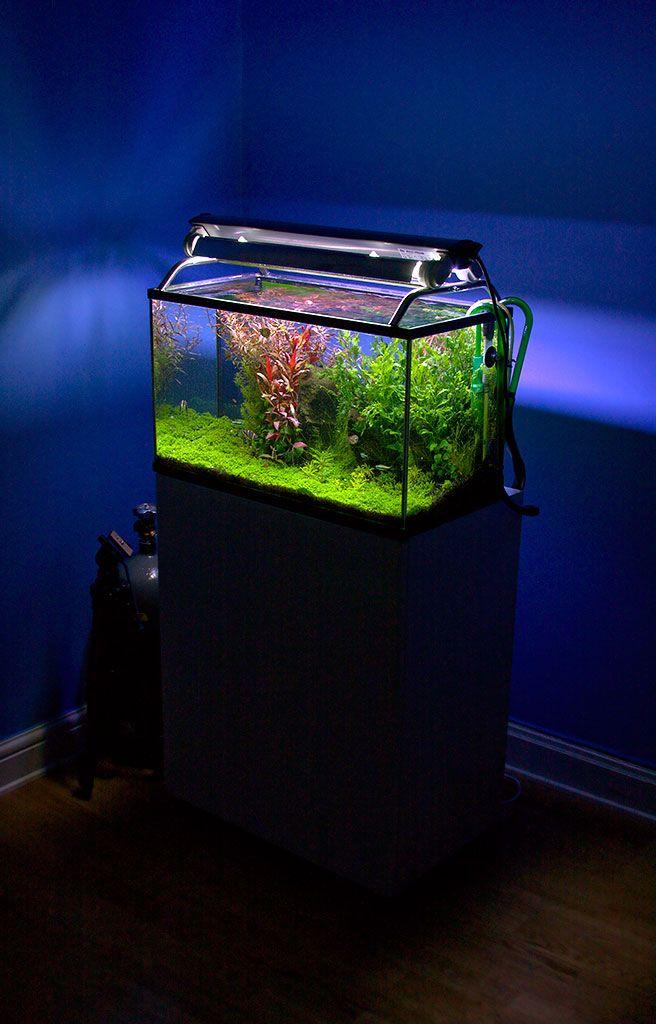 9 Langkah Membuat Aquarium Di Rumah Dengan Mudah