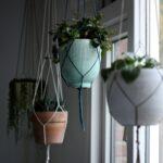 tanaman hias gantung indoor