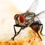 cara mengusir lalat dari kamar