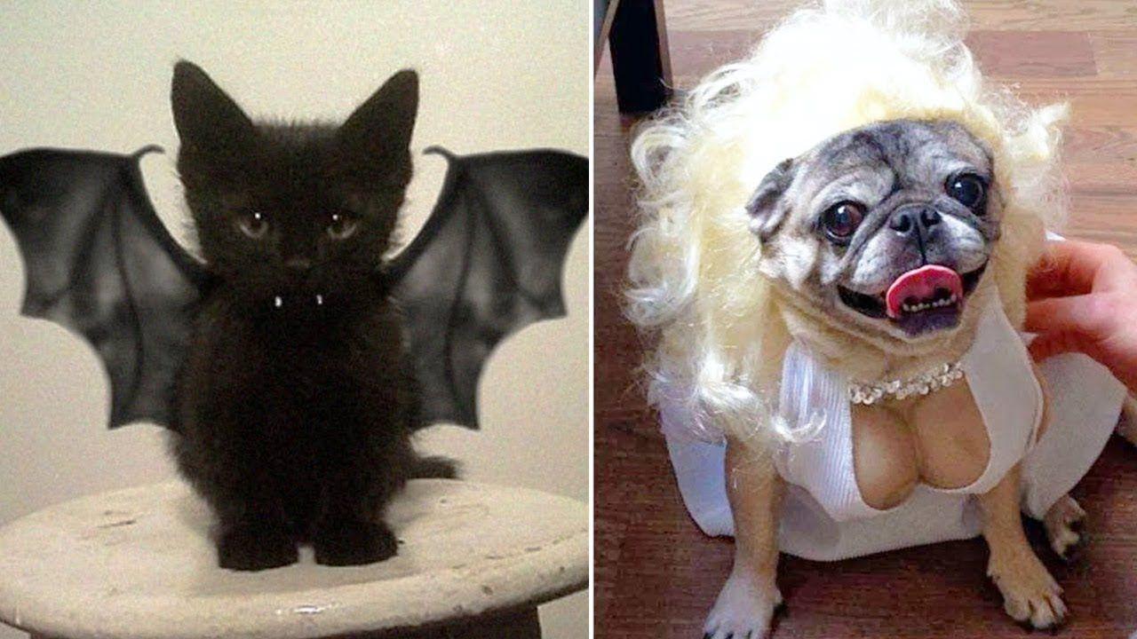 Kostum Halloween hewan peliharaan