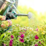 tips meninggalkan tanaman sebelum liburan