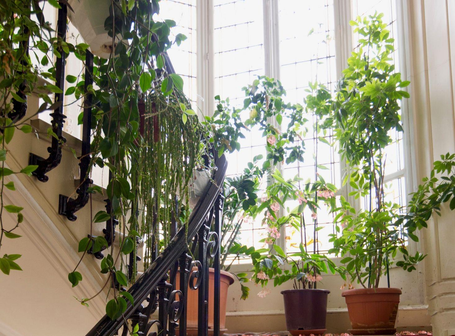 tanaman sebagai dekorasi