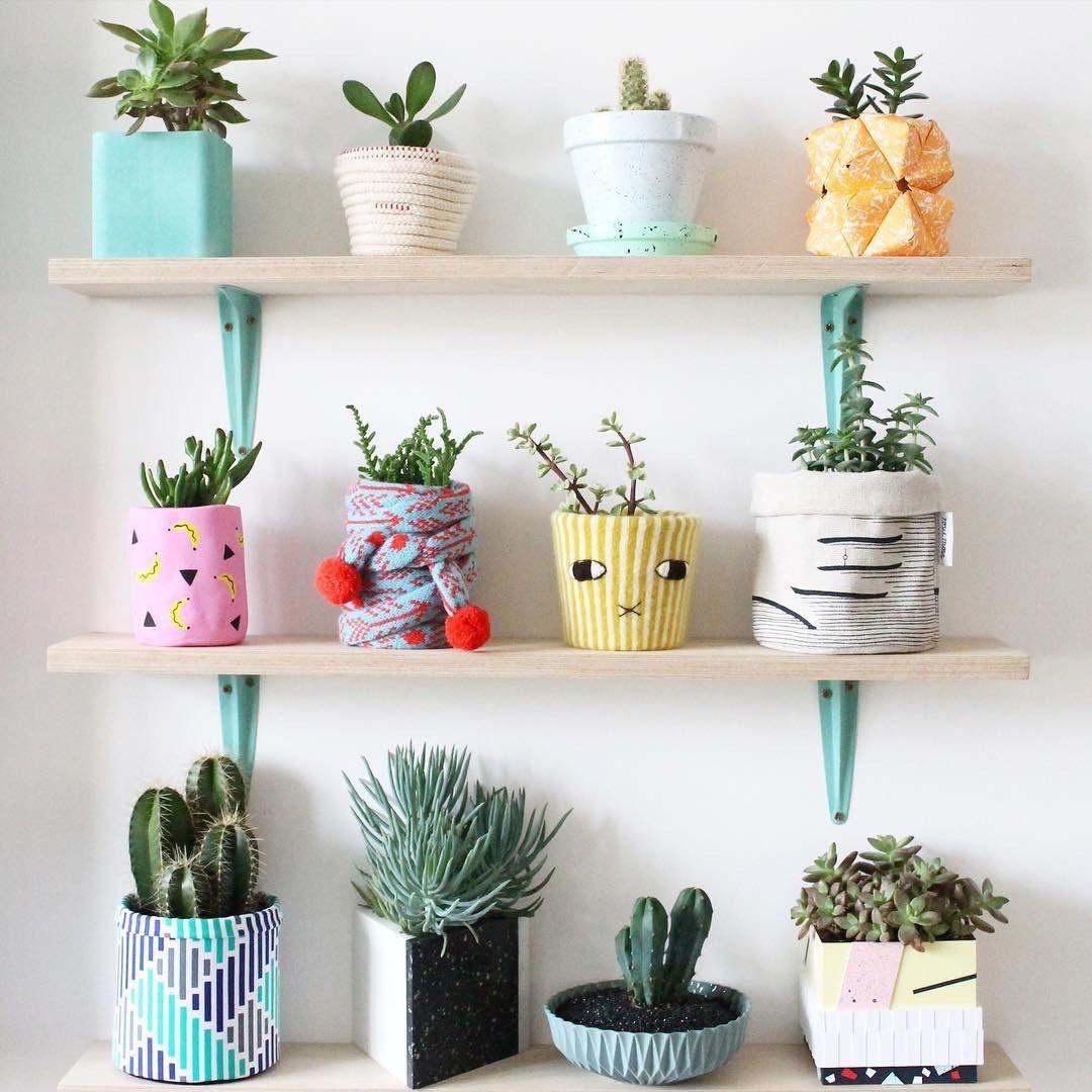 display tanaman hias