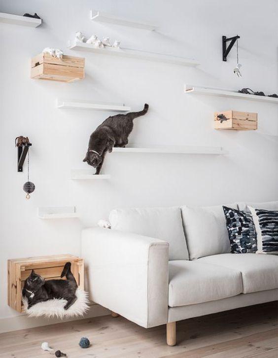 tips menciptakan rumah nyaman untuk peliharaan - tempat bermain kucing