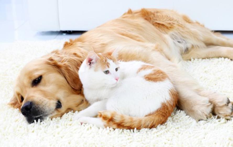 tips menciptakan rumah ramah hewan - pilih kain berkualitas