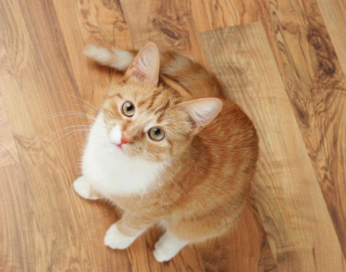 tips menciptakan rumah ramah hewan - perhatikan pemilihan lantai