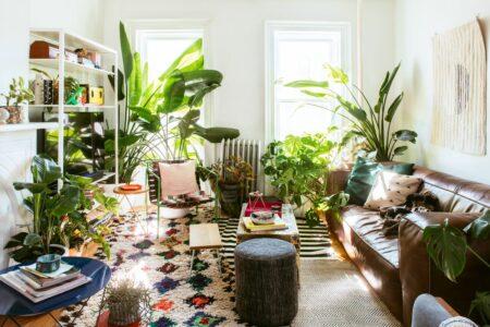 dekorasi interior tanaman