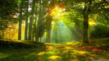 Manfaat sinar matahari bagi kesehatan tubuh dan jiwa