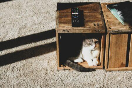 rumah dengan hewan