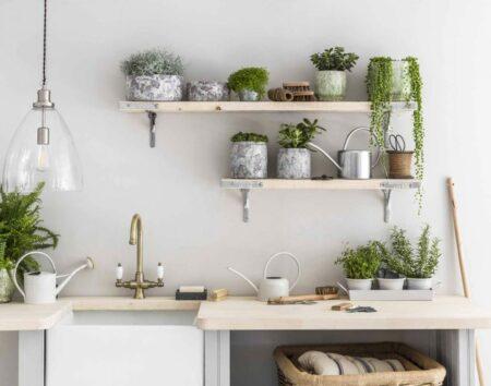tanaman dapur