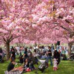 Bunga musim semi khas Jepang