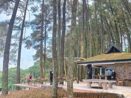 cafe tengah hutan